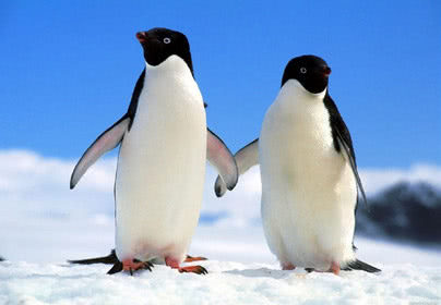 《中国(深圳)极地文化园》门票1张:参观纯种南极企鹅,海豹,北极狐