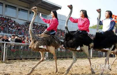 原价180元《深圳野生动物园+》